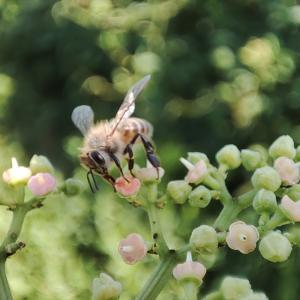 ミツバチとハチミツの日