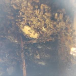 採蜜と継箱
