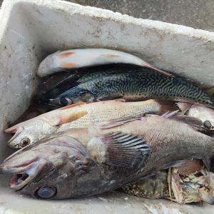 今日の夕食は魚づくし