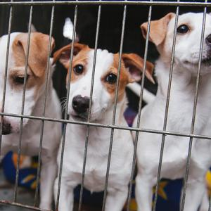 殺処分寸前から災害救助犬へ。