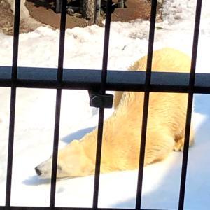 旭山動物園でリフレッシュ☆
