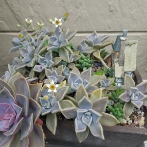 花が咲いた☆タニク植物