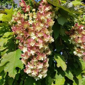 夏の庭☆暑さにめげない花たち