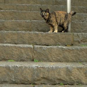 階段の途中で止まって様子見し
