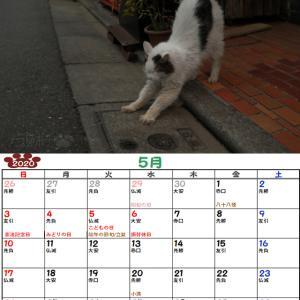 10周年企画!ノラ猫ポチと自由猫2020年カレンダー_5月(半野良チッチさんVer)