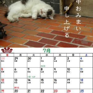 10周年企画!ノラ猫ポチと自由猫2020年カレンダー_7月(半野良チッチさんVer)