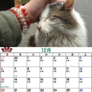 10周年企画!ノラ猫ポチと自由猫2020年カレンダー_12月(半野良チッチさんVer)