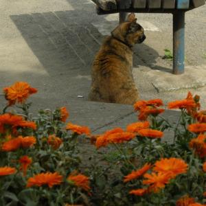 花の向こうで見つめるは?