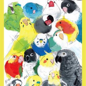 11/1(金)は東急ハンズ梅田店10F「インコと鳥の雑貨展」開催初日の実演に入ります