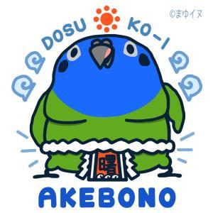 伝説のヨコヅナがやってきました…「AKEBONOインコ」