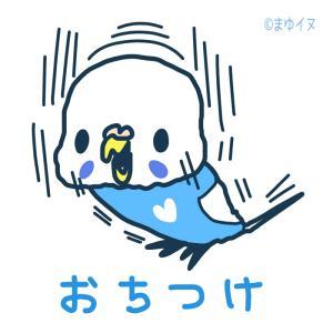 新作「おちつけインコ」 & 6/30~7/6新宿小田急にて開催の「新宿ことり博」に出展します