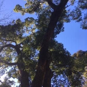 金の成る木(#^.^#)