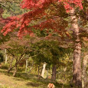 長瀞へ紅葉狩り ②月の石もみじ公園