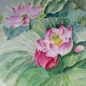 蓮の花&蓮の実
