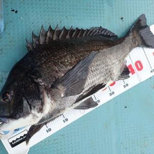 東京湾で三種目釣りに挑戦