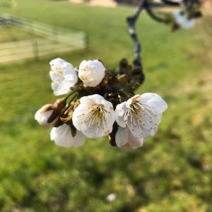 【春とシラカバ製品】