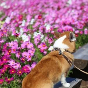 佐賀空港コスモス園のすぐ近くの畑