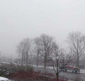 雪!・・・だった