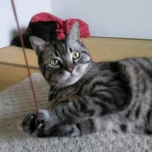 ネズミでアダムちゃんが釣れた。
