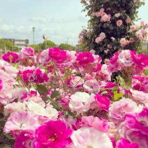 バラ 薔薇 ばら