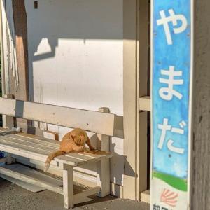 小湊鐡道2019.10 #5 ~ (=^・^=) 上総山田駅 #2 ~ にゃ~にゃ~の日