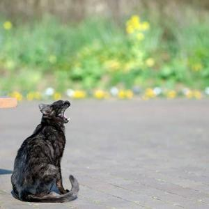 ~ 猫の あくび ~ にゃ~にゃ~の日
