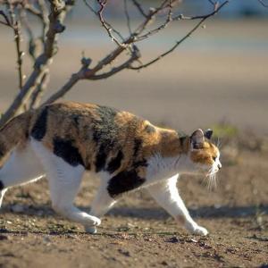 2021.1 千葉ポートパーク付近 #5 ~ 散歩で出会った猫さん ~ にゃ~にゃ~の日