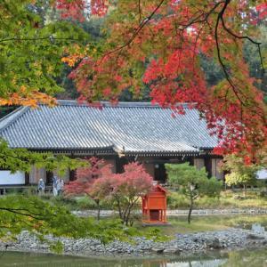 紅葉が見ごろ!静寂と清浄の聖地 浄瑠璃寺/毎日新聞「やまと百寺参り」第29回