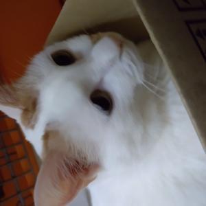 猫の抗癌剤治療費用の話