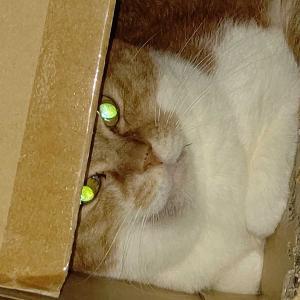 我が家の家庭内野良猫を病院に連れて行く