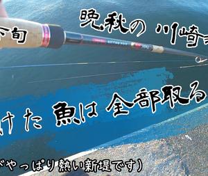 11/23 川崎新堤 シーバス×3 サワラ×1