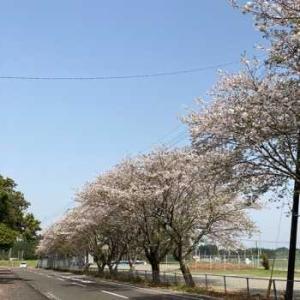 桜の季節の取り合わせ