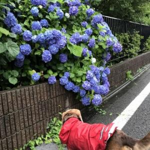 雨散歩☔️