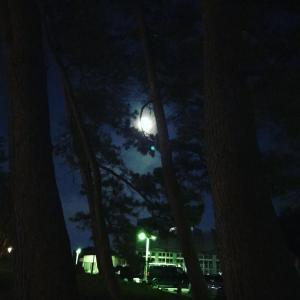月が綺麗🤣
