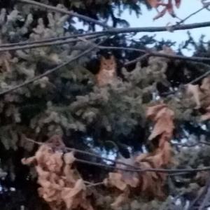 フクロウの訪問