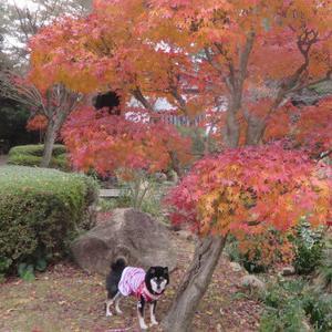 いつもの公園にも紅葉はあるよ