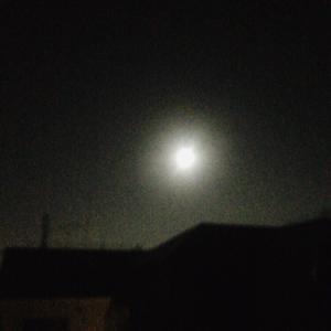 今日は満月♬月明かりが綺麗だよ