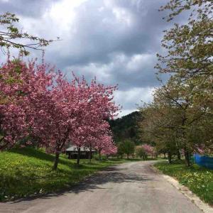 置賜三十三観音巡礼~第四番・中村観音 (2019.5/6)