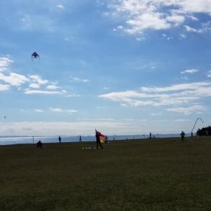 日本の凧の会 秋季大会中止で自由参加