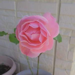 薔薇「クィーンエリザベス」がひらきそう