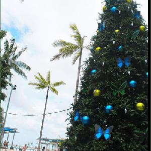 ◆ 夏のクリスマス 〜2018〜 ◆