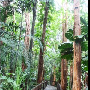 ◆ ユーカリの巨木!!たっぷりアロマ ◆