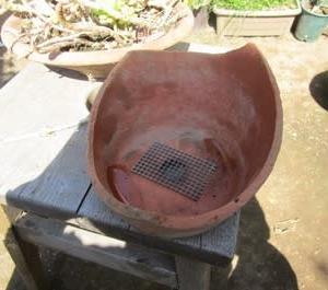 割れた植木鉢に多肉植物を植える