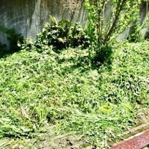 天気の良い日は草刈りをする。