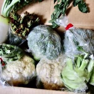 群馬の野菜が届く