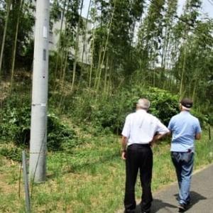 父ちゃん竹林の探検に行く