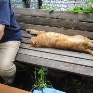 我が家の猫の姿