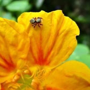 青紫蘇の葉を食べる庭の生き物