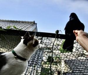 カラスと猫の睨み合い