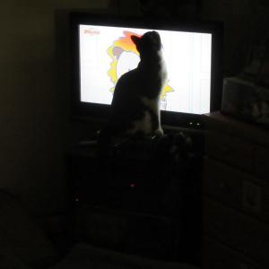 テレビばっかり見るようになっちゃった。